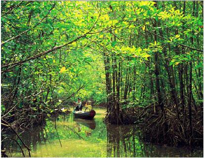 Giữ rừng ngập mặn - ứng phó với biến đổi khí hậu Rung2